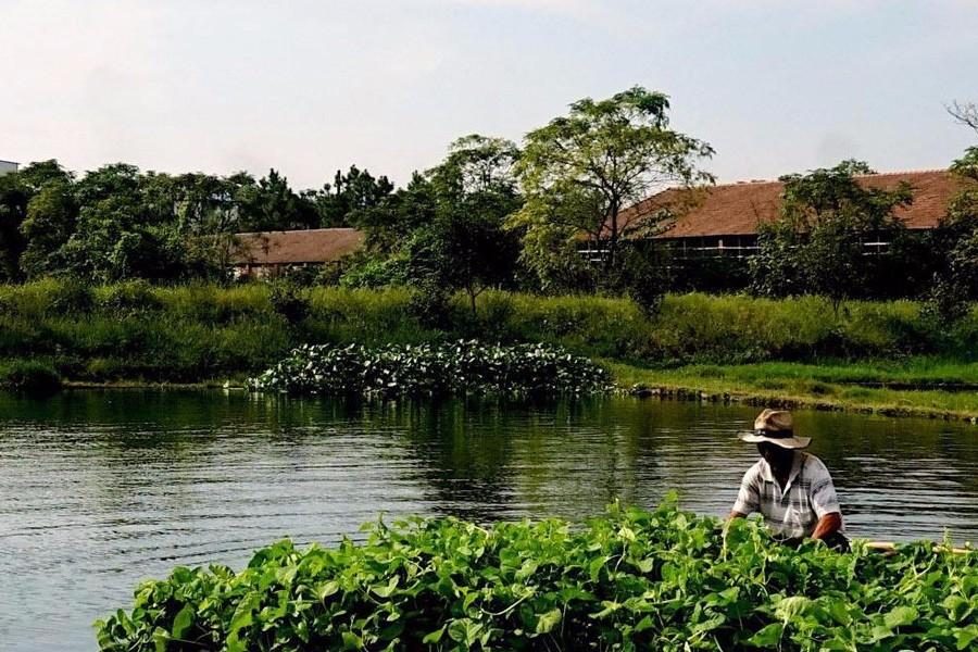 稻虾种养年收百万:全国优质小龙虾养殖用地鱼塘水田推荐