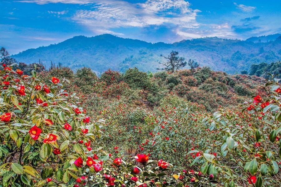 全国优质油茶基地山林地项目转让出租