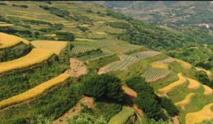勝利鄉46500畝耕地 — 水澆地出租