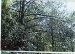 云南保山1257亩林地转让(49年)