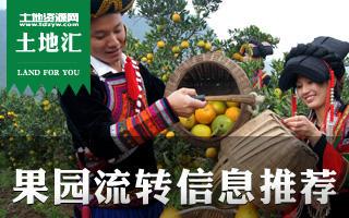 土地汇第10期:全国果园水果种植土地流转信息推荐及种植技巧
