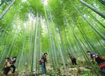 江西新余4700亩林地转让7000000元