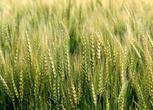 207公路家庭农场,种植农民专业合作社,好项目承包,合作。