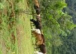 云南临沧1100亩土地出租出让合伙种植养殖
