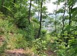 河南安阳林州市690亩承包山林转让