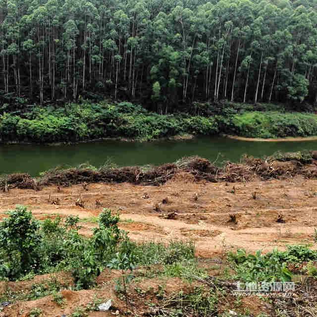 广东广州增城市中新镇170亩休闲旅游农场出租 租金:20
