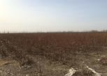 新疆哈密56亩农用地出租
