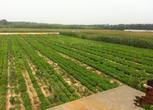 辽宁省盘锦市盘山县70亩养殖场转让