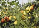 新疆和田100000亩农用地转让