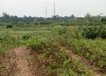 山东东营5000亩农用地出租