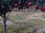 甘肃天水12亩农用地转让