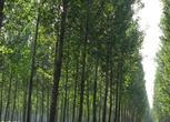 山西晋城泽州县8000亩林地合作入股