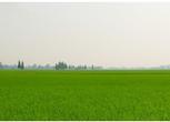 黑龙江七台河1500亩农用地转让