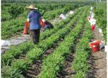 黑龙江七台河350亩农用地转包