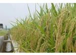 黑龙江黑河1700亩农用地转让