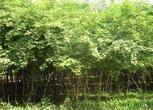 陕西铜川500亩农用地转让