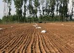 河南商丘10000亩农用地转包