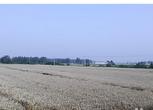 安徽蚌埠怀远县7.5亩农用地出租
