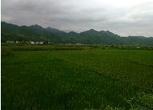 贵州铜仁79.2亩农用地转让转让费:9.900万元