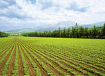 广西来宾7000亩耕地转让