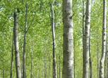 安徽池州贵池区736亩林地转让