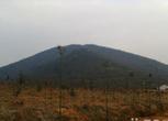 安徽巢湖2000亩山林出租