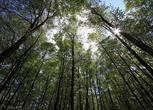 浙江省丽水市龙泉市430亩林地转让