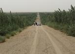 新疆和田洛浦县2000亩农用地转包