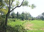 100亩桂花苗圃转让