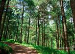贵州黔东南黄平县50000亩林地转让