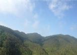 云南文山广南县3000亩林地转让