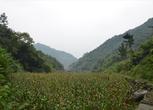 湖北十堰郧县2708亩林地转让