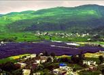 贵州独山县1100亩林地、草地合作或转让(如合作种植猕猴桃,有国家项目扶持)