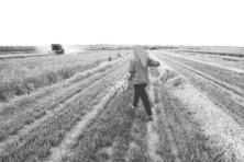聚焦农村土地承包法修改:框架思路已基本形成