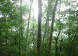 陕西安康平利县12000亩林地转让转让费:350万元