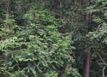 湖北十堰茅箭区2300亩林地转让