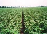 新疆喀什英吉沙县220亩耕地转让