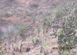 湖南怀化溆浦县1200亩林地转让转让费:680万元