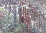 福建三明明溪县427亩林地转让