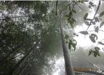 湖南郴州20000亩旱地 林地出租