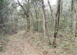安徽宣城宁国市53亩山地 林地 水库转让转让费:45万元