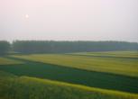 安徽蚌埠五河县1000亩耕地 旱地合作入股