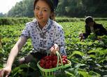 山东滨州博兴县30亩园地转让转让费:55万元