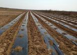 山东滨州沾化县260亩其它转让21万元