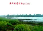 四川内江隆昌县胡家镇蒲芦村72.18亩葡萄园发包