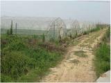 南昌縣武陽200畝種植園轉讓和尋找合作伙伴,地租一年一交,價格面議