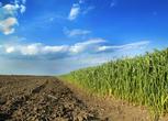 山东德州齐河县400亩耕地 水浇地出租 租金:1200元/亩/年
