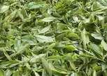 稀有资源:百亩野生古茶树园地转让
