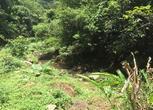 广东梅州3000亩林地转让