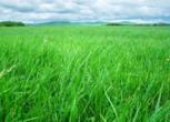内蒙古呼伦贝尔鄂伦春自治旗5000亩草场 农场 草地转包